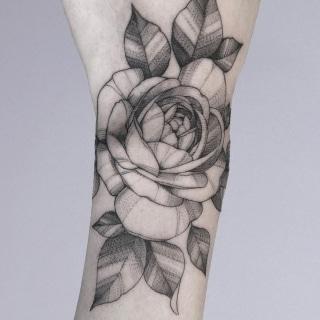 Fine Line Rose